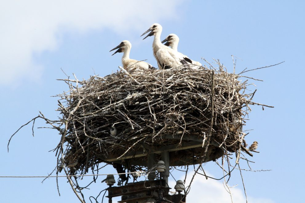 Nesting in the Executive Team?