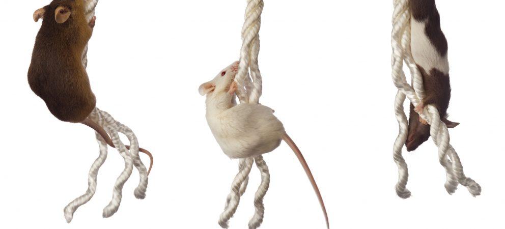 Rat Race Leadership Teams